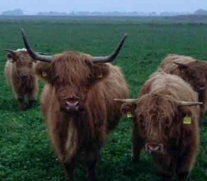Highlander Rindfleisch Regional